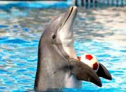 دلفینها شبیه به انسان هستند